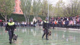 Cómo los perros de la Policía Local de Granada detectan la droga en los colegios