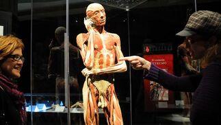 Uno de los cuerpos expuestos en 'Body Worlds'.  Foto: Juan Carlos Vazquez