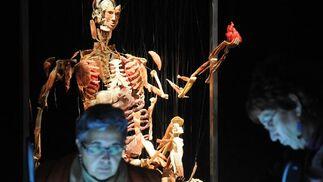 Una de las obras de la exposición 'Body Worlds'.  Foto: Juan Carlos Vazquez