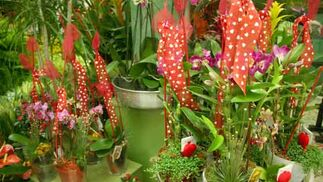 Plantas decoradas en Ramitos.  Foto: Victoria Hidalgo - Belén Vargas