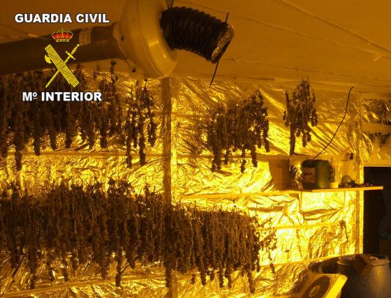 Otras 175 plantas estaban colgadas durante la fase de secado. / Guardia Civil  Foto: Granadahoy.com
