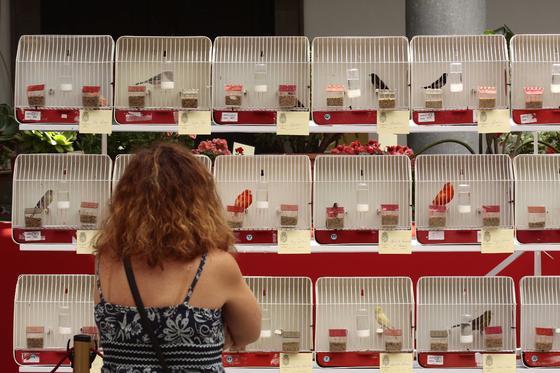 El concurso de pájaros también atrajo a numeroso público  Foto: María de la Cruz