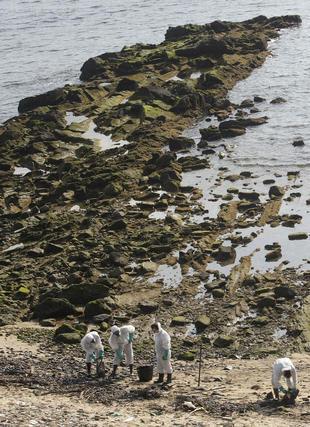 Desplegado el dispostivo de limpieza en la playa de Getares.  Foto: Erasmo Fenoy