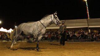El recinto de Equimar celebró un espectáculo ecuestre que fue seguido por numeroso público  Foto: Paco P./Sonia Ramos