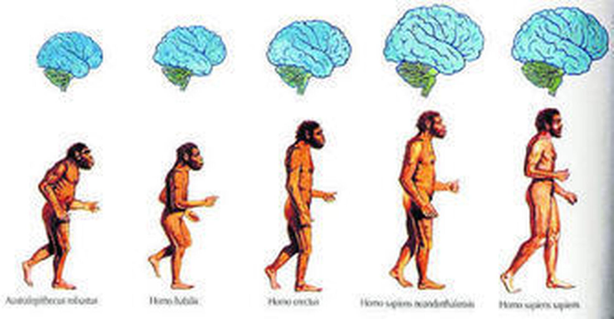 fa18dea9e2 La evolución de los sentidos