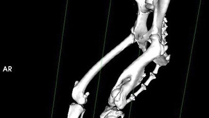 El nuevo escáner del Hospital Veterinario Sur de Granada permitirá tratar en profundidad a los animales.