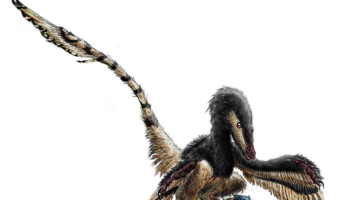 Conviviendo Con Dinosaurios Con estos dibujos de dinosaurios podrás imprimir y pintar grandes animales que ya se han extinguido como el branquiosaurio, el velociraptor, el tiranosaurio o el diplodocus. conviviendo con dinosaurios