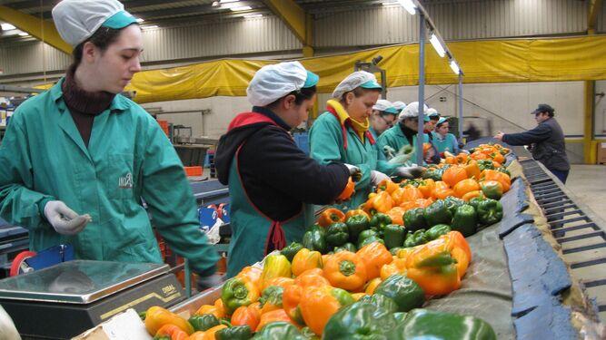 La feria internacional Fruit Attraction celebra hoy el Día de Granada