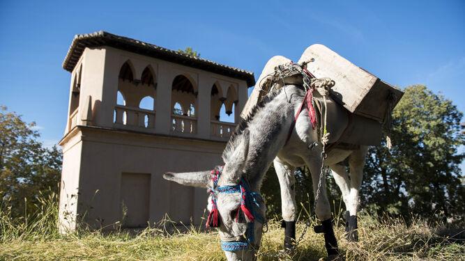 Manías,      el último fichaje de    la Alhambra