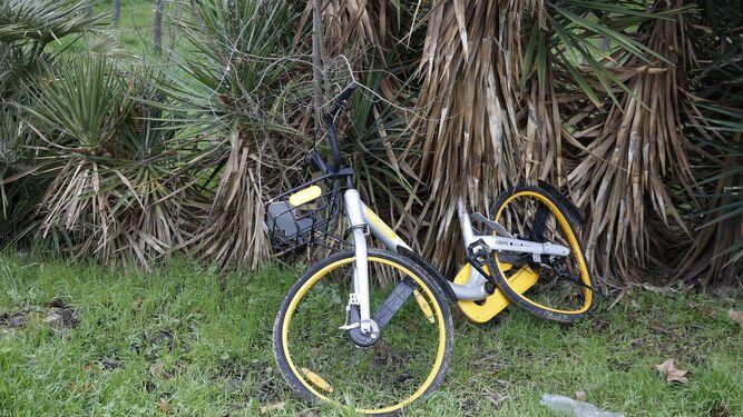 El vandalismo no acaba: aparece una bici por los aires en Cartuja