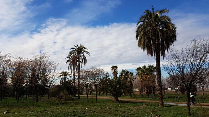 1. El proyecto para transplantar los árboles se impulsó en 2012 con el departamento de Botánica de la UGR. 2. La zona está repleta de palmeras, cipreses, olmos o plátanos. 3. Sería interesante colocar carteles informativos para explicar la historia del Metroparque.
