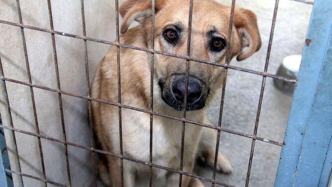 El objetivo es dar una oportunidad a un millar de animales abandonados.