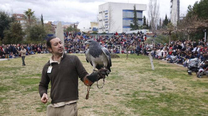Las aves rapaces no pudieron volar con motivo de la lluvia.