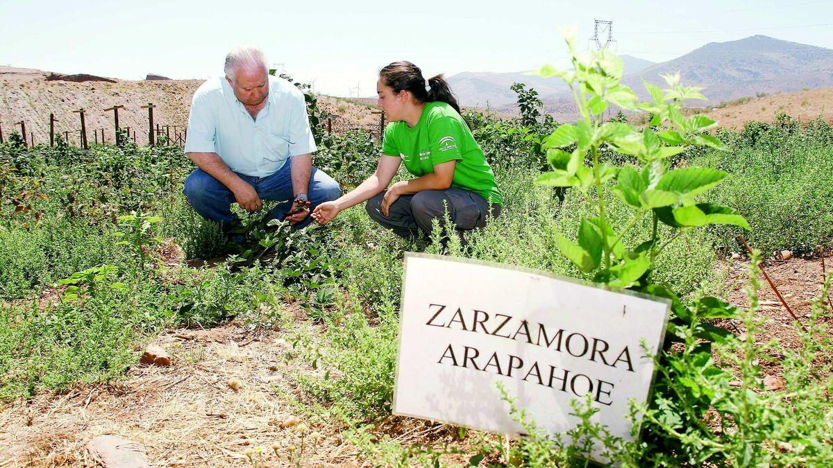 El Parlamento Europeo convierte a Granada en capital de la agricultura ecológica - Granada Hoy